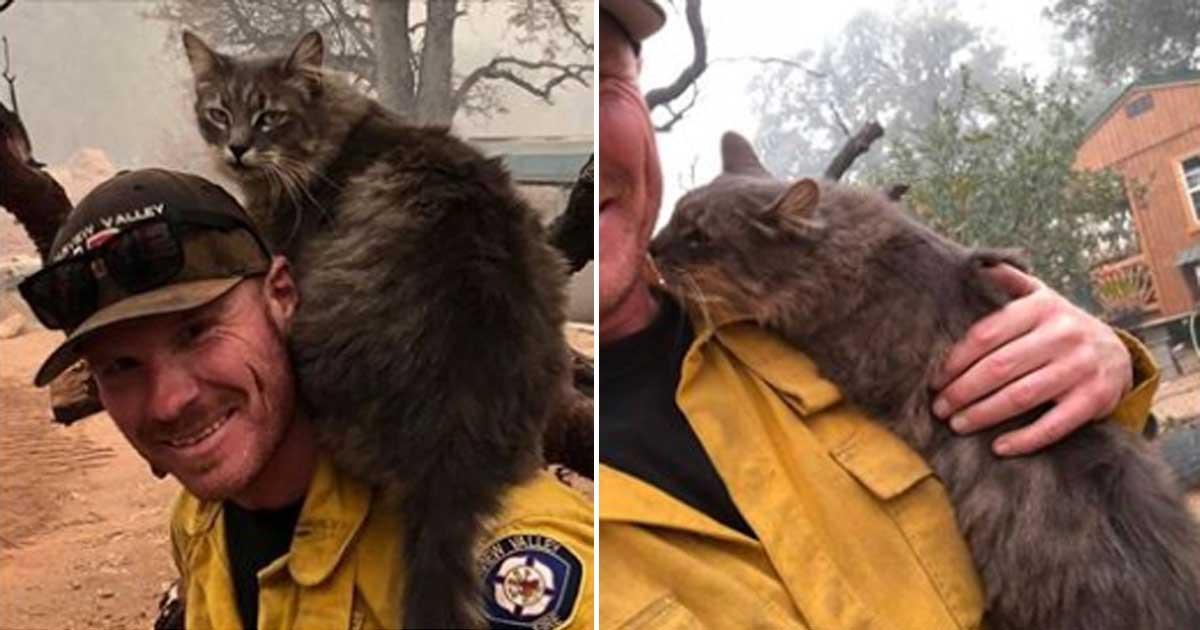 Cat Won't Leave Firefighter's Side After He Saved Her